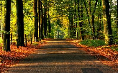 Road to Autumn Wallpaper