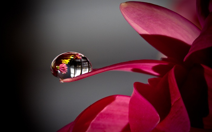 Viva-Macro Shot of a Vibrant Flower with Dew Drop