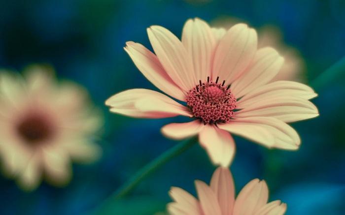 Soft Flower Wallpaper
