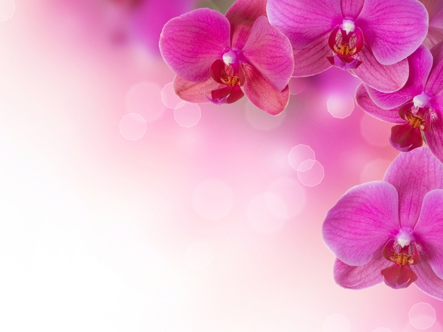 Pink Flower Wallpaper for Windows PC and Mac