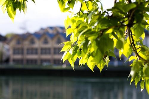 Spring Foliage Wallpaper